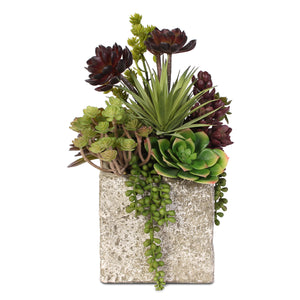 Succulent, Hen & Chicks Coastal Cottage Arrangement in Stone Pot #JS03