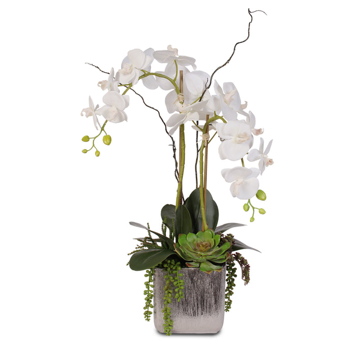 Real Touch White Orchid and Succulent Arrangement #JS05