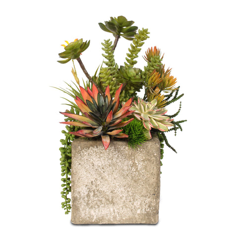 Colorful Succulent Arrangement in a Ceramic Cube #JS08