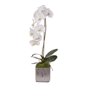 Jenny Silks White Real Touch Silk Phalaenopsis Orchid in Square Etched Silver Ceramic Pot #JS11