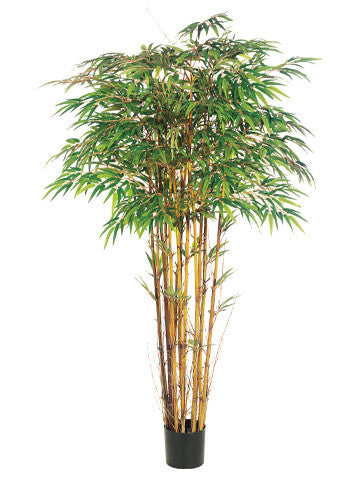 Natural Trunk Bamboo Tree #LPB156-GR/TT