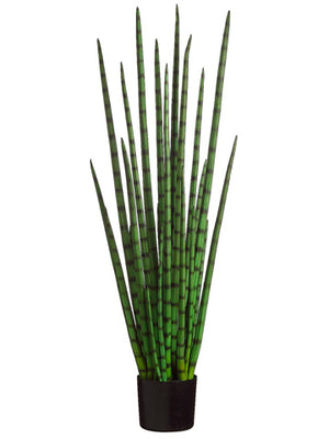 4' Snake Grass in Black Plastic Pot Green #LPG724-GR
