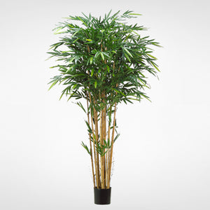 Tropical Bamboo Tree #LTB114-GR