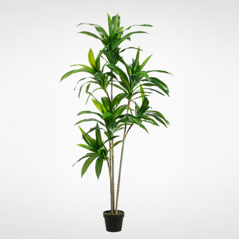 Exotic Dracaena Tree #LTD765-GR