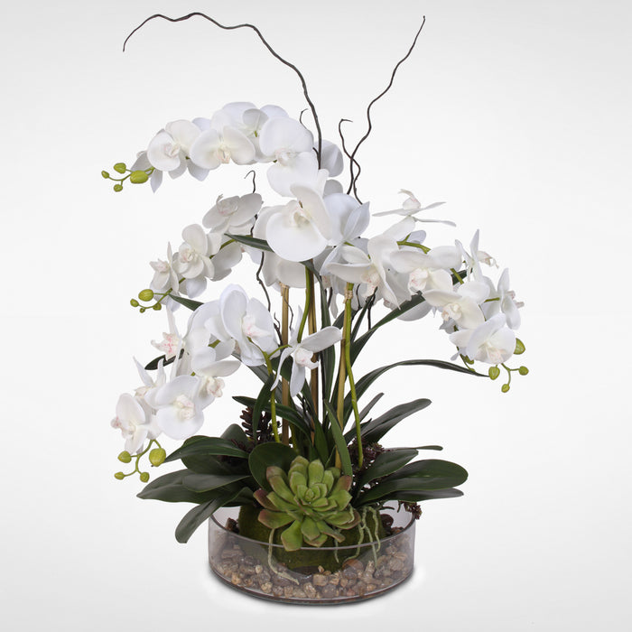 Real Touch White Phalaenopsis Orchid with Succulents and Natural Rocks in a Glass Pot #OS-16