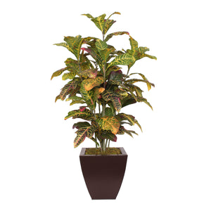 Colorful 4' Croton Tree in Brown Metal Pot #P-13