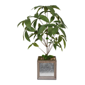 Fake Botanical Chinese Money Tree with Natural Pebbles and Reindeer Moss in Grey Wood and Metal Square Pot #P-16