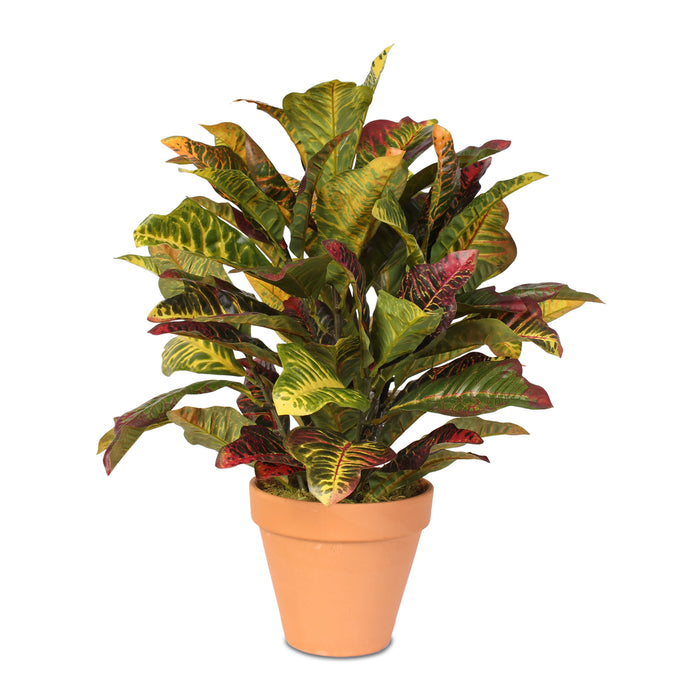 Real Touch Croton Plant in Clay Pot #P-70D