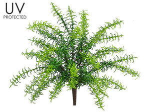 UV Protected Rosemary Bush (12 Bushes Total) #PBF430-GR
