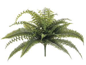 Dragon Fern Bush with 41 Leaves #PBF971-GR
