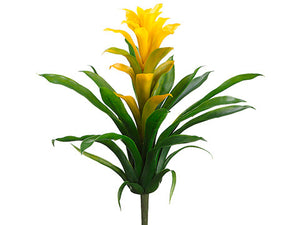 Bromeliad Plant Stem (6 Plant Stems Total) #PPT016