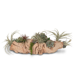 Succulents in Grapevine Wood Log #S-24