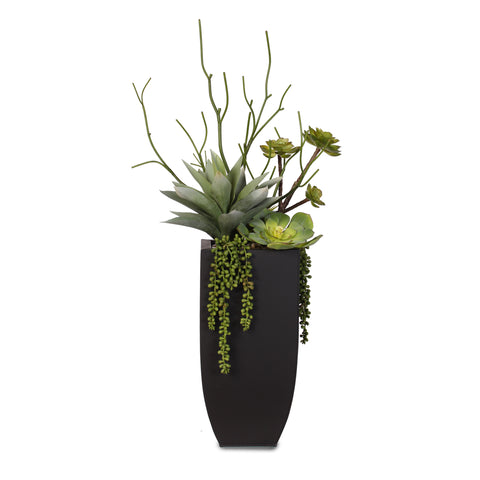 Botanical Succulent Variety in a Tall Black Modern Metal Planter #S-77