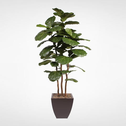 7' Brazilian Fiddle Leaf Tree with Real Wood Trunks in Brown Pot #T-100