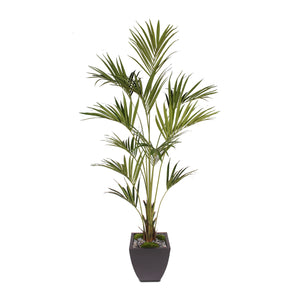 7' Silk Kentia Palm Tree in Black Zinc Metal Pot #T-103