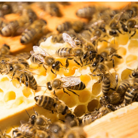 what are bee colonies