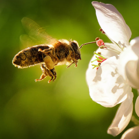 why are bees important