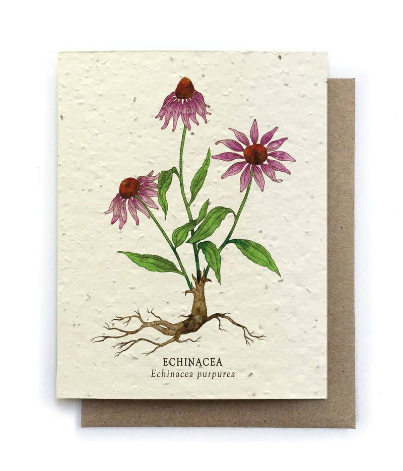 Plantable Card - Echinacea