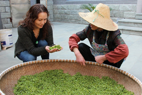 dragon well green tea examining tea leaves