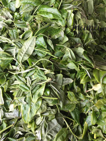 withering fresh leaves of Ba Nuo raw puerh tea