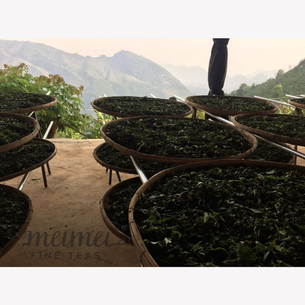 Yunnan moonlight white tea processing withering meimei fine teas