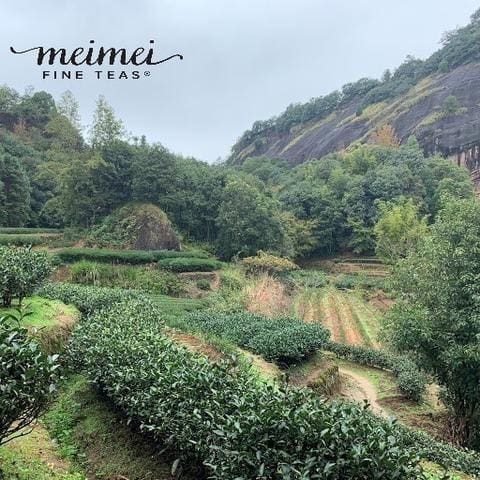 Meimei Fine Teas chinese tea planation wuyi cliff oolong