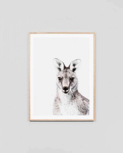 Eastern Grey Wallaby Print