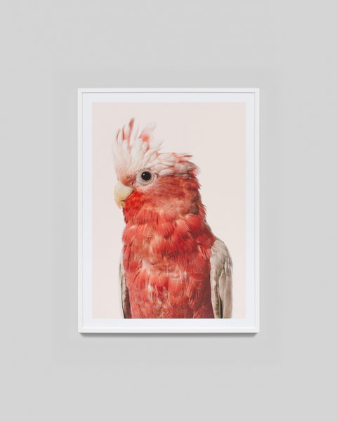 Rose Cockatoo Print