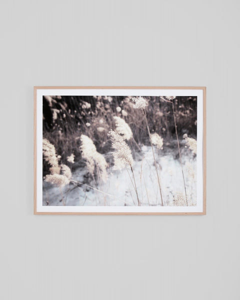 Winter Pampas Print
