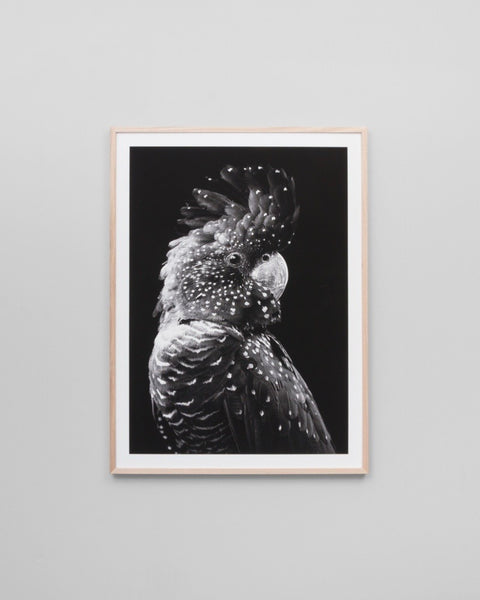 Black Cockatoo Grey Print