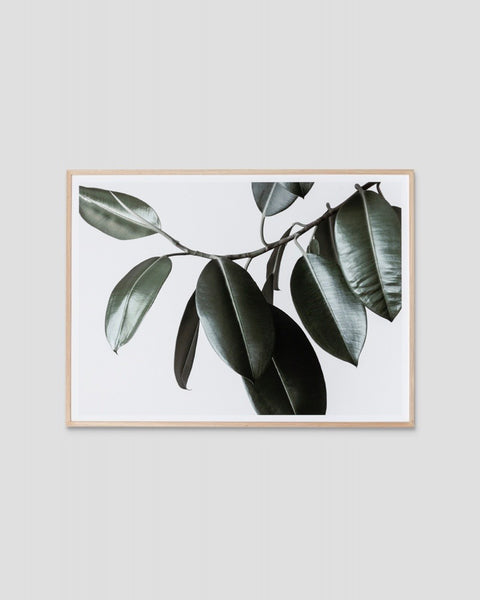 Rubber Tree Print