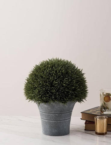 Indoor Plant - The Decor Kart