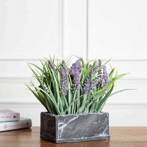 Lavender Plant in Slate Grey Planter
