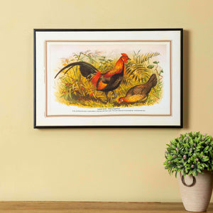 Indian Bird Series - Red junglefowl