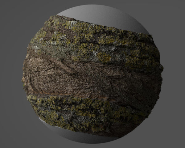 Tree bark #04 - Texturing.xyz