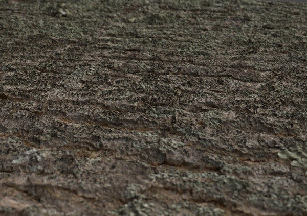Tree bark #01 - Texturing.xyz