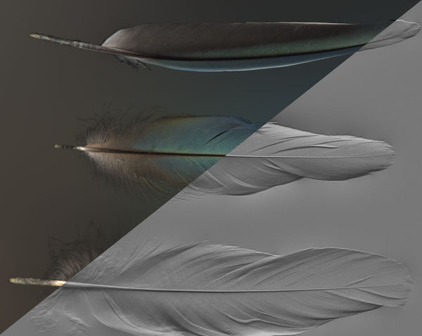 Feather #02 - Texturing.xyz