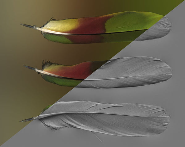 Feather #01 - Texturing.xyz