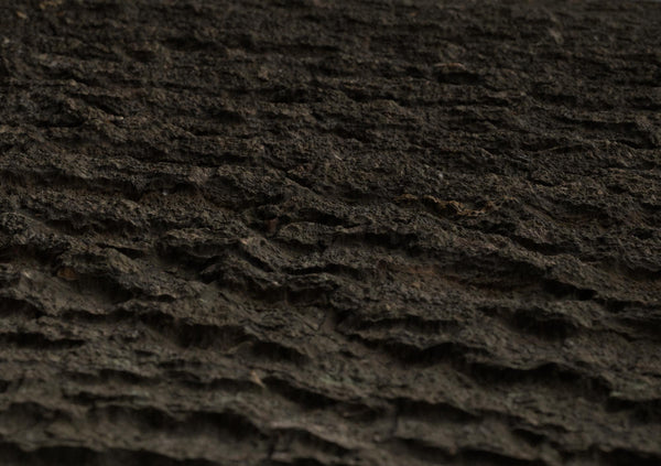 Tree bark #03 - Texturing.xyz