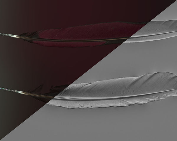 Feather #03 - Texturing.xyz