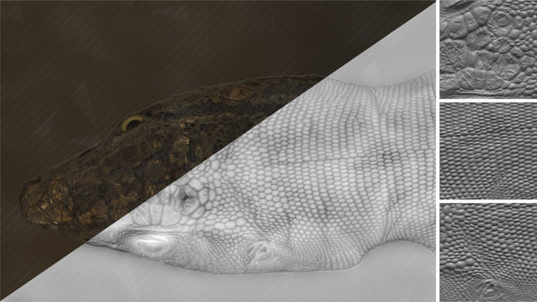 Lizard head #01 - Texturing.xyz