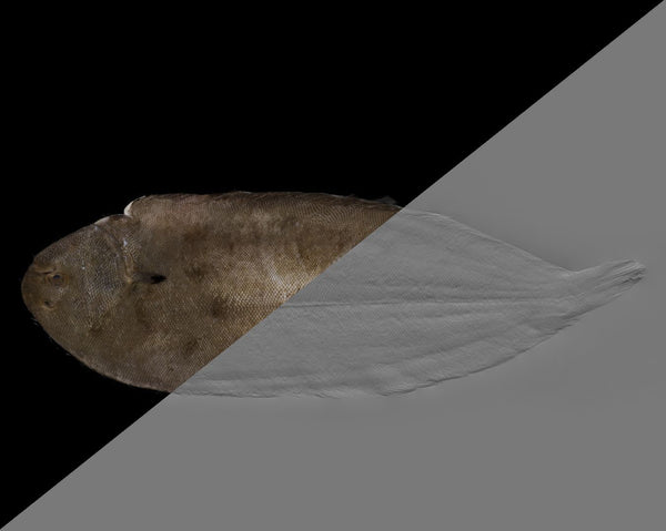 Fish sole #04 - Texturing.xyz