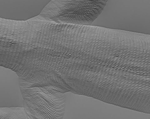 Lizard body #05 - Texturing.xyz