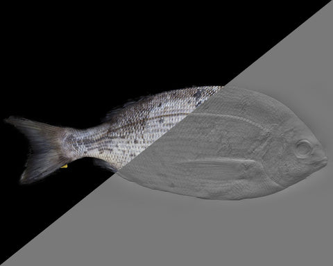Fish bream #01 - Texturing.xyz