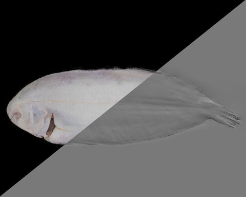 Fish sole #03 - Texturing.xyz
