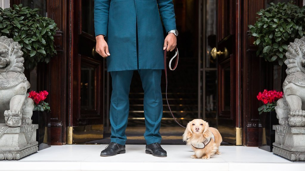 Mandarin Oriental Pawtners with Teddy Maximus