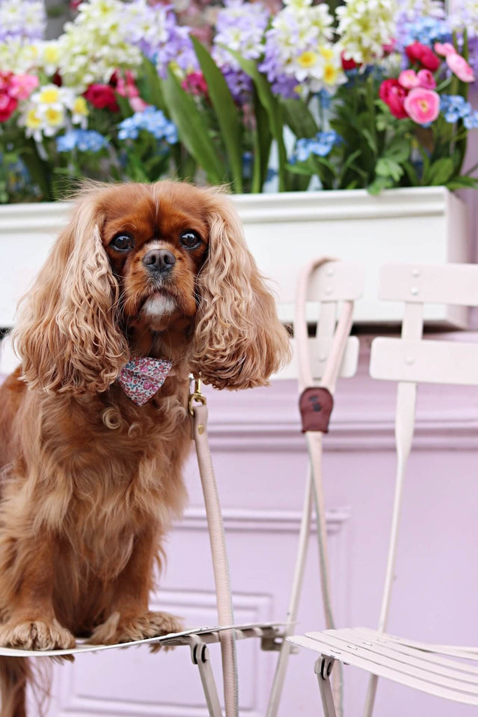 Meet Eva & Amelia - Sloane Street's 'Fluffy Icon'!
