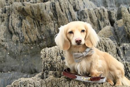 Teddy's trip to Salcombe - a dog friendly weekend break!