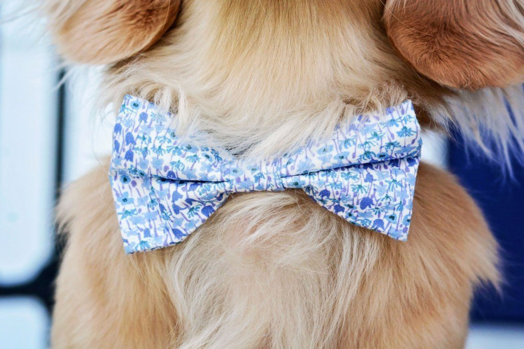 Liberty print accessories for your Dog! Treat your pooch to a beautiful floral bow tie, dog bed, carrier and more!