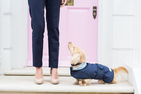 Luxury Dog Coats by Teddy Maximus - ideal for keeping warm and cosy!